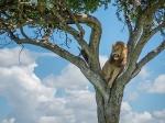 മസായി മാര...വന്യജീവികളുടെ അസാധാരണ കാഴ്ചകള് ഒരുക്കുന്നിടം