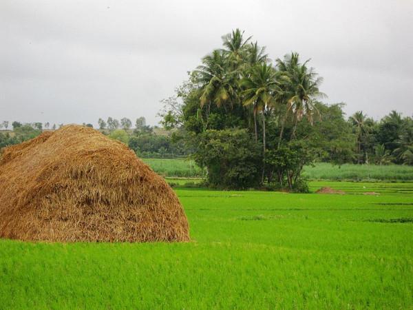 ബാംഗ്ലൂർ - മൈസൂർ റോഡിലെ കാഴ്ചകൾ