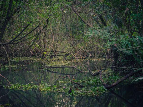 പാതിരാമണല്: കായലിനു നടുവിലെ പച്ചത്തുരുത്ത്