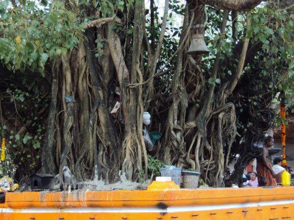 ശ്രീകോവിലും പ്രതിഷ്ഠയുമില്ലാത്ത പരബ്രഹ്മ ക്ഷേത്രം