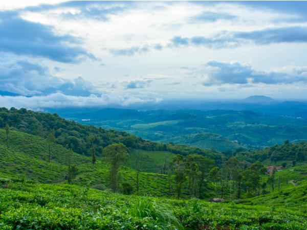 Updates on Wayanad Chembra Peak Trekking
