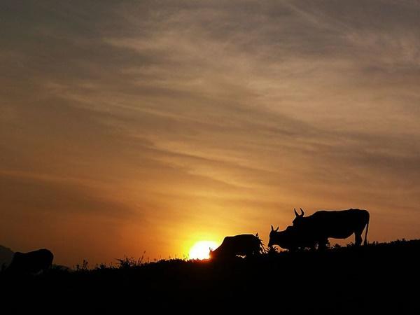 പുഷ്പഗിരി വന്യജീവി സങ്കേതം...അപൂർവ്വ പക്ഷികളുടെ ആശ്വാസ കേന്ദ്രം