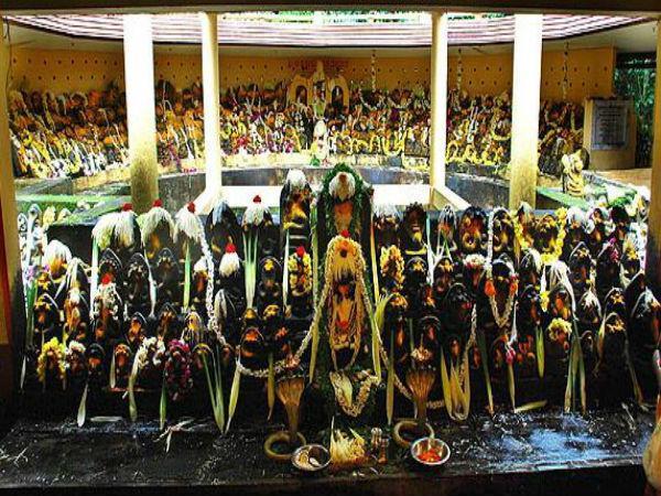 300 ൽ അധികം നാഗപ്രതിമകളുള്ള നാഗവനം..സർപ്പദോഷം മാറാനെത്തുന്ന വിശ്വാസികൾ.. ഈ ക്ഷേത്രം അറിയുമോ!!