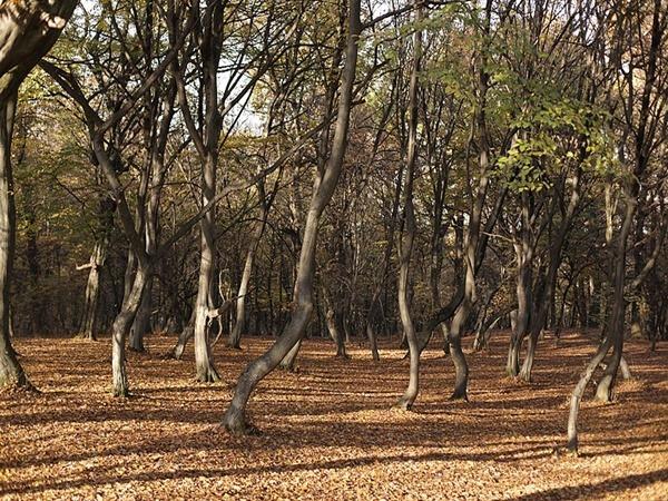 മുട്ടുകുത്തി പ്രാര്ത്ഥിക്കുന്ന മരങ്ങള്...കാണാതാവുന്ന സന്ദര്ശകര്...ഇത് കരയിലെ ബർമുഡ ട്രയാങ്കിള്