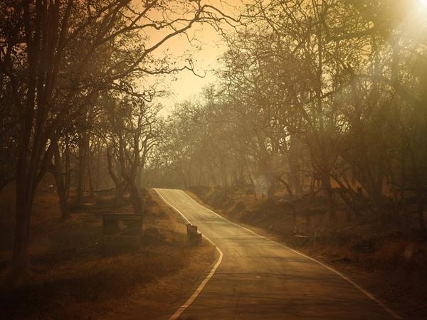 സൗത്ത് എന്നും പൊളിയാണ്! ഇതാ സൗത്ത് ഇന്ത്യയിലെ ഏറ്റവും മികച്ച റോഡ് ട്രിപ്പുകള്