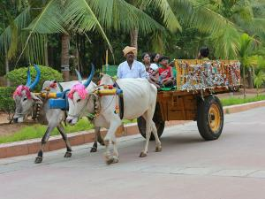 Most Amazing Adventure Safari India 000336 Pg