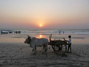 Top 7 Beaches Konkan Coast