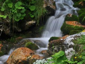 Mankayam Water Falls Unexplored Water Fall Thiruvananthapura