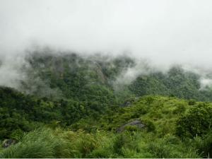 Palakayam Thattu The Misty Hill In Kannur
