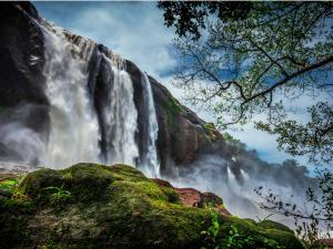 Jungle Safari Monsoon Tourism