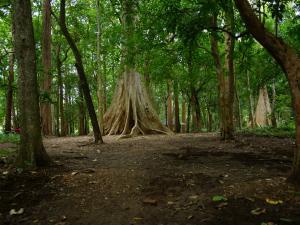 Nilambur The Oldest Teak Plantation The World