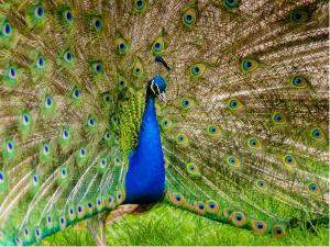 Travel Guide Choolanur Peacock Sanctuary
