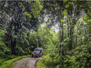 Things Know Jungle Trip Trekking