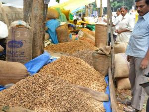 The Festival Groundnuts