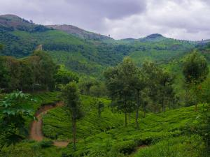 Must Visit Forests In India