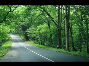 Beautiful Scenic Drives In Kerala