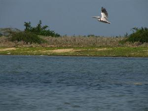 Enjoy The Pristine Lake Birdlife At Pulicat Malayalam