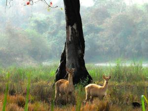 Wonderful Places In Assam That You Should Visit
