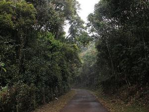 Forests That You Shoulds Visit Tamil Nadu