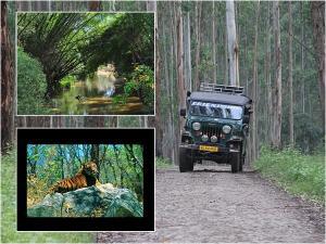 Travel Guide Sulthan Batheri Wayanad