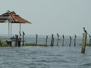 Famous Bird Sanctuaries Kerala