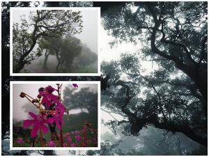 Travel Guide To Kodachadri Trekking And Kollur Temple