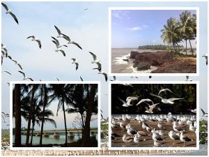Kadalundi Bird Sanctuary In Malappuram Timings Entry Fee And How To Reach