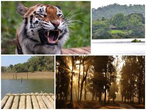 Tiger Reserves In India To Go For Tiger Spotting