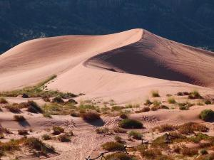 Desert National Park In Rajasthan Attractions Timings And How To Reach