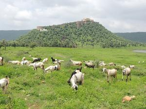 Sariska In Rajasthan Attractions And How To Reach