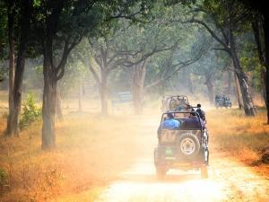 Jungle Safari In India Things You Can Do
