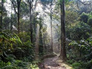 From Eravikulam National Park To Peppara Wildlife Sanctuary Best National Parks In Kerala