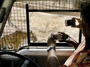 Safari Bannerghatta National Park