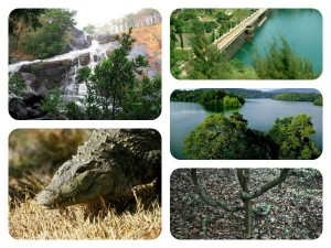 Ecotourism Kerala Neyyar Wildlife Sanctuary
