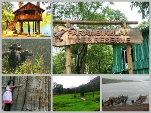 Kerala Eco Tourism Travel Parambikulam
