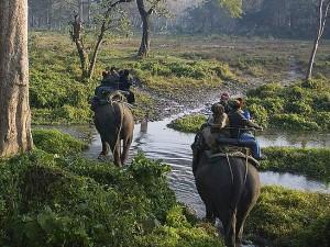Animals Amazing Safaris India
