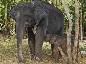 Elephant Camps South India