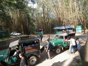 Wayanad Wildlife Sanctuary Wayanad