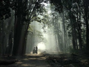 Jim Corbett National Park Travel Guide