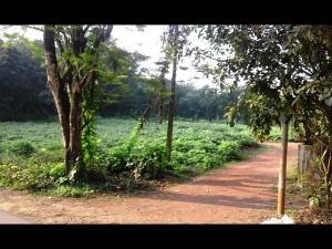 New Amarambalam Reserved Forest Nilambur