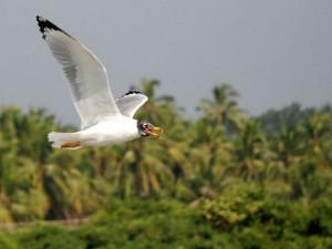 Kadalundi Bird Sanctuary Kerala