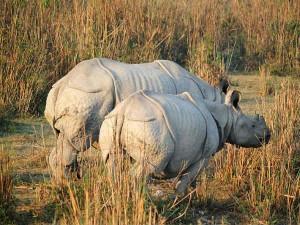 Kaziranga India S Rhino Paradise