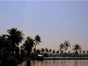 Kumbalangi The Model Tourism Village In Kerala