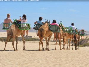 About Camel Safari In India
