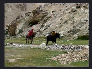 Reasons Visit Dras In Jammu Kashmir