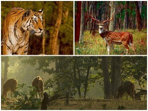 Bhopal To Pench National Park To An Inspiring Weekend G