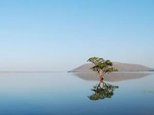Must Visit Beautiful Lakes In Warangal