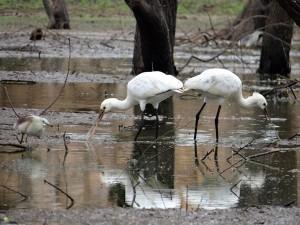 Salim Ali Bird Sanctuary Goa Attractions Timings How Reach