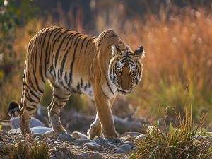 Jim Corbett National Park In Uttarakhand Specialities Timings And How To Reach