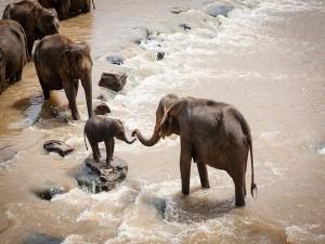Sakrebailu Elephant Camp In Karnataka Attractions Timings And How To Reach